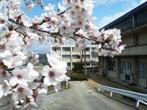 吉川高校の画像
