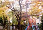 新宿区立余丁町幼稚園の画像