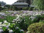 堀切菖蒲園の画像