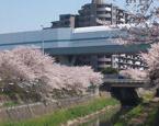秋ケ瀬緑道の画像