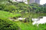 隅田公園の画像