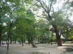 十三公園の画像