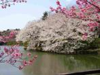 三ッ池公園 の画像