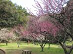 久良岐公園の画像