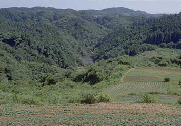 横浜自然観察の森01